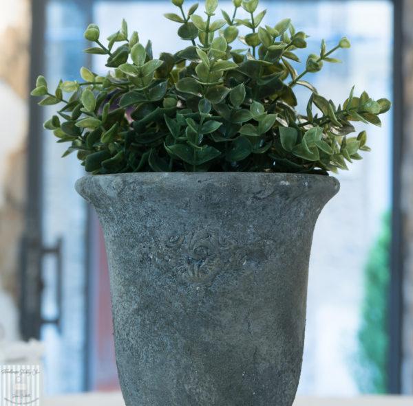 vaso in pietra con esempio pianta